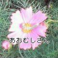 a0020440_1755256.jpg
