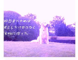a0036544_21424021.jpg