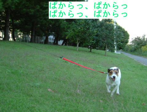 a0017817_1554431.jpg