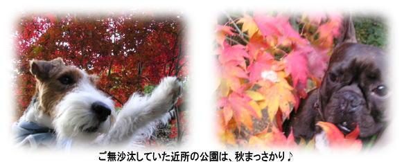 a0037682_0115583.jpg