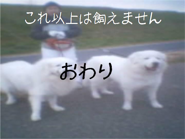 c0014317_2061982.jpg