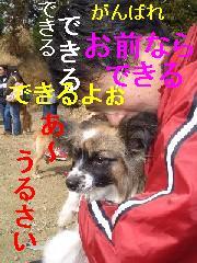 c0049339_17383620.jpg