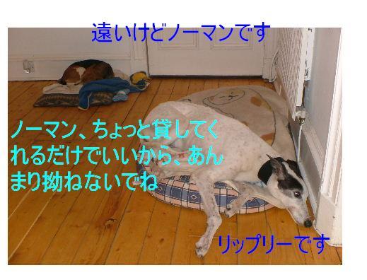 c0027188_2401952.jpg