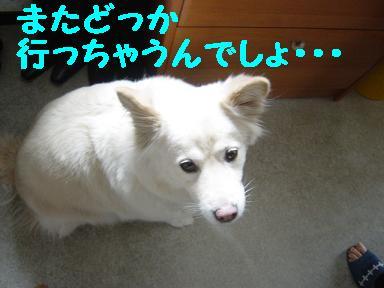 c0021898_118043.jpg