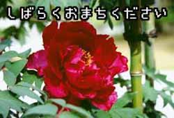 c0072032_1701837.jpg