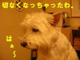 c0004744_1003060.jpg