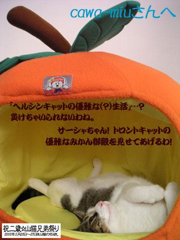 c0006748_6213294.jpg