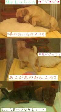 c0069698_6173.jpg