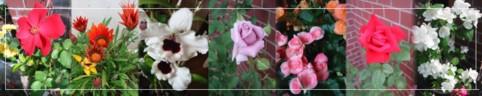 c0073703_23443532.jpg