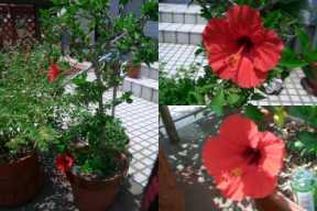 今年最初の開花