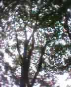 c0071839_8273628.jpg
