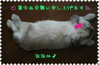 c0032257_17474643.jpg