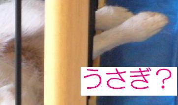 a0017817_951968.jpg