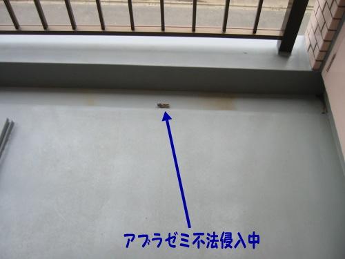 a0021882_1322471.jpg