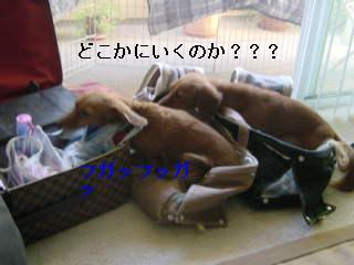 c0058494_9124828.jpg