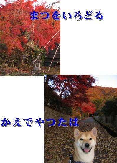 e0085147_20501523.jpg