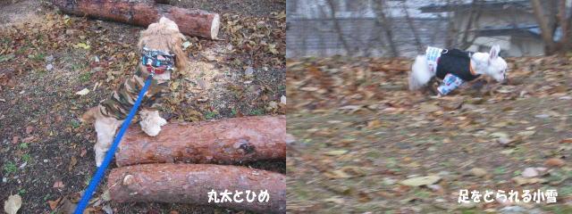 a0057438_18315860.jpg