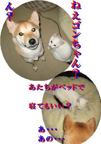 e0085147_028686.jpg