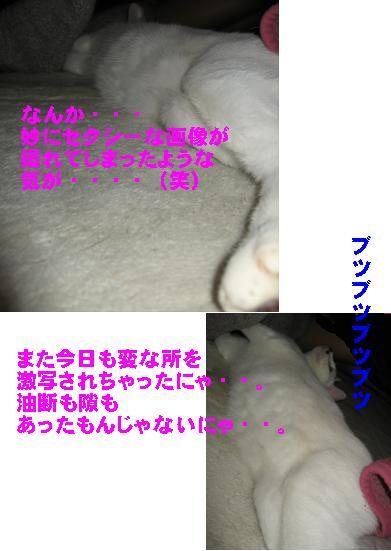 e0085147_228626.jpg