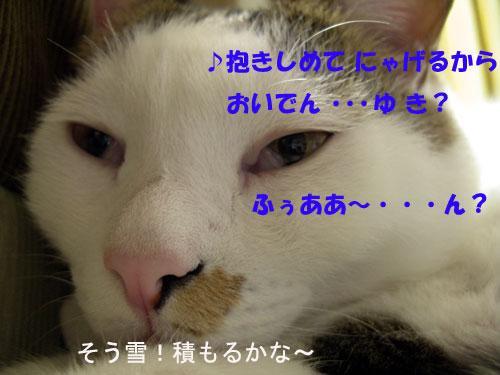 a0013879_23244431.jpg