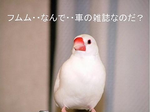 a0019545_2013131.jpg