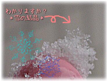 c0025852_10295613.jpg