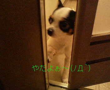 e0032508_214438.jpg