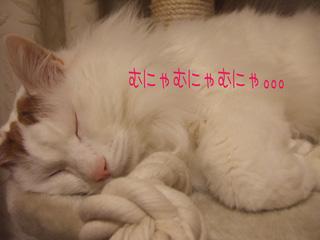 c0048042_188367.jpg