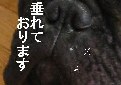 c0015354_1439672.jpg