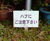 c0059596_2145694.jpg