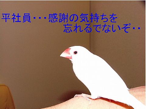 a0019545_21184120.jpg