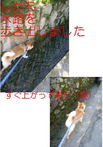 e0085147_0451583.jpg