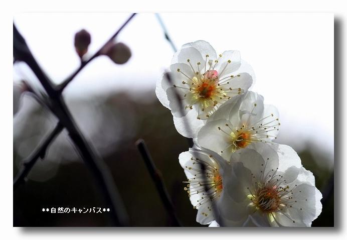 e0052135_1837683.jpg