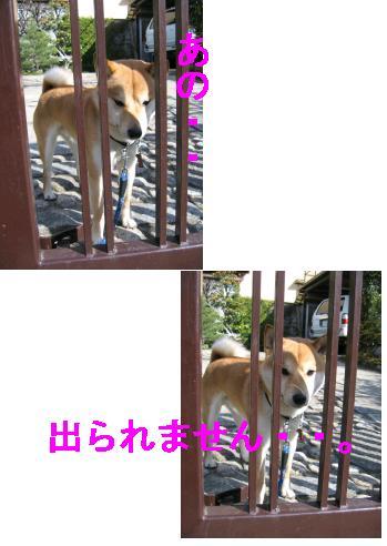 e0085147_1753263.jpg