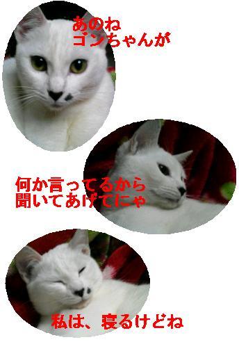 e0085147_1342559.jpg