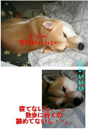 e0085147_137302.jpg