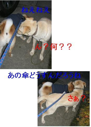 e0085147_763472.jpg
