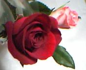 a0013937_0343268.jpg