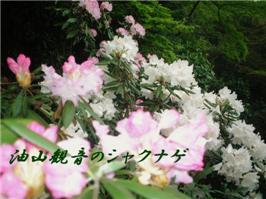 e0012724_1891514.jpg