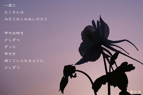 a0002073_1495753.jpg
