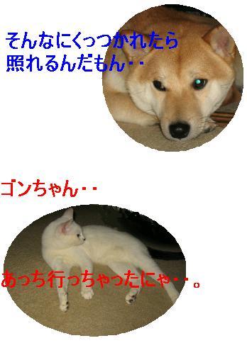 e0085147_1123495.jpg