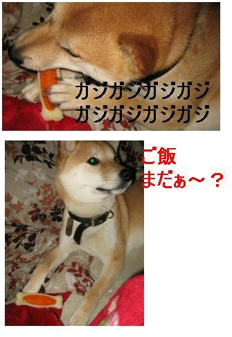 e0085147_2501212.jpg