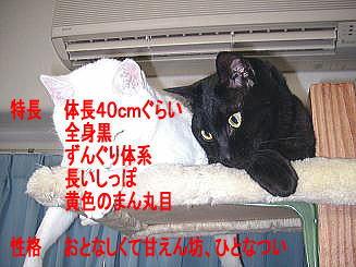 c0015610_1810990.jpg