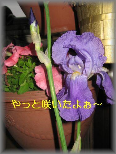 e0085147_13204569.jpg