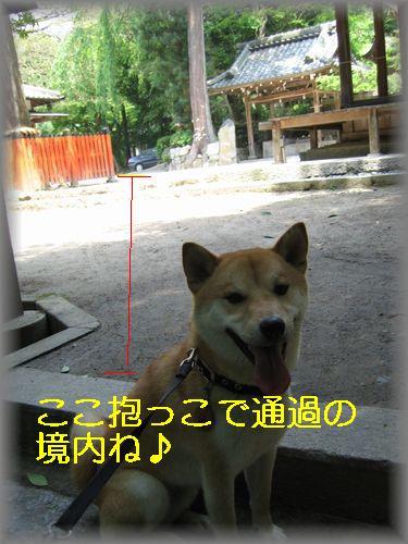 e0085147_155672.jpg