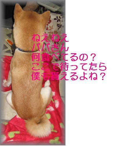 e0085147_157339.jpg