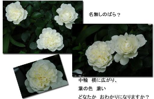 e0029943_17363235.jpg