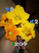 c0073332_8525768.jpg