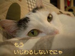 a0021971_2303794.jpg