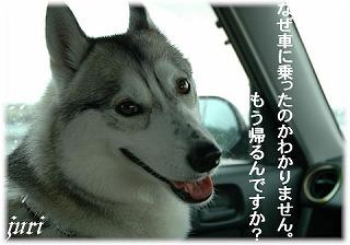 a0047325_053947.jpg